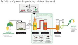 Het Deinol-proces van Deinove (Bron: Synbiobeta.com blog)