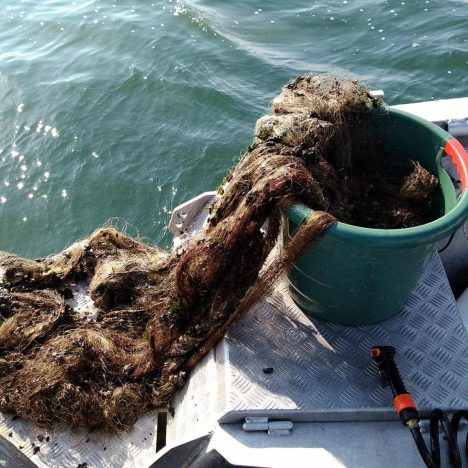 net sea